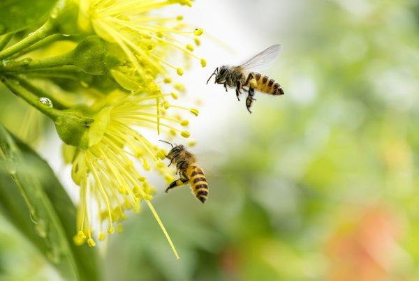 polinizadores abejas protección de cultivos agricultura áreas verdes huertos jardines sanidad vegetal aepla