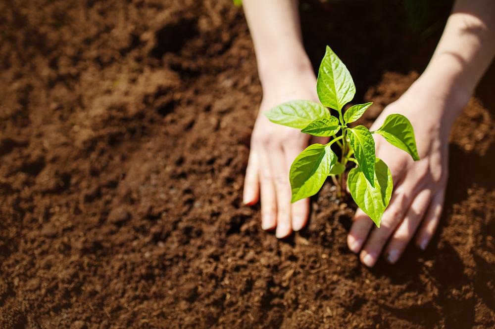 Límite Máximo de Residuos seguridad alimentaria protección de cultivos sanidad vegetal agricultura aepla