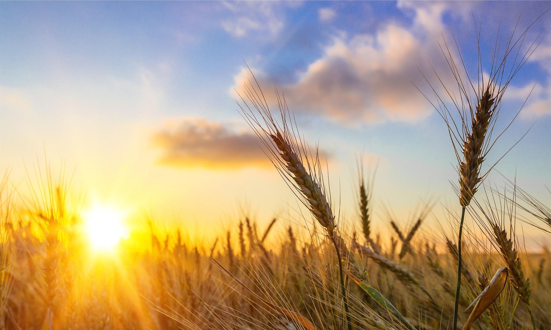 ¿Cuáles son las principales amenazas agrícolas para tus cultivos durante el verano?