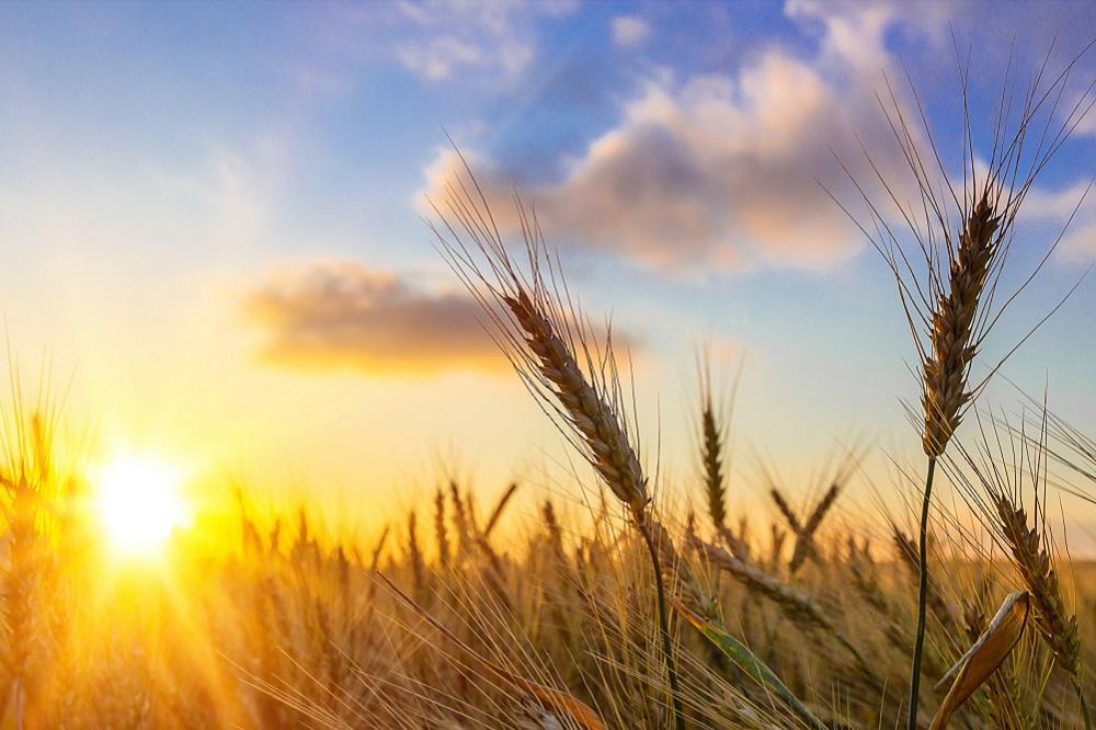 amenazas agrícolas verano protección de cultivos sanidad vegetal agricultura aepla