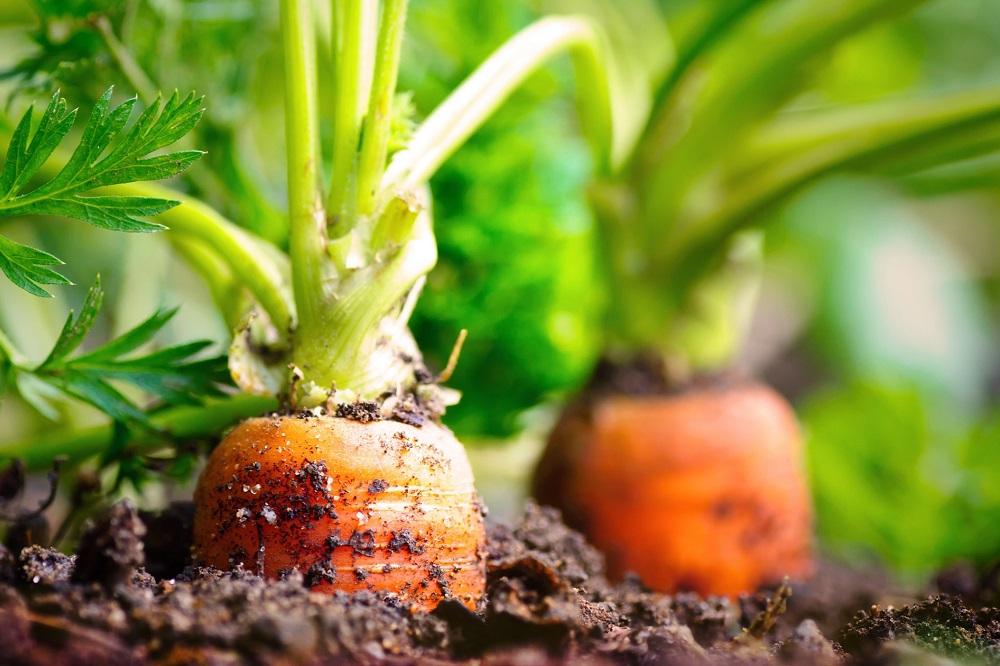 ¿A qué dimensiones debemos prestar atención cuando hablamos de seguridad alimentaria?