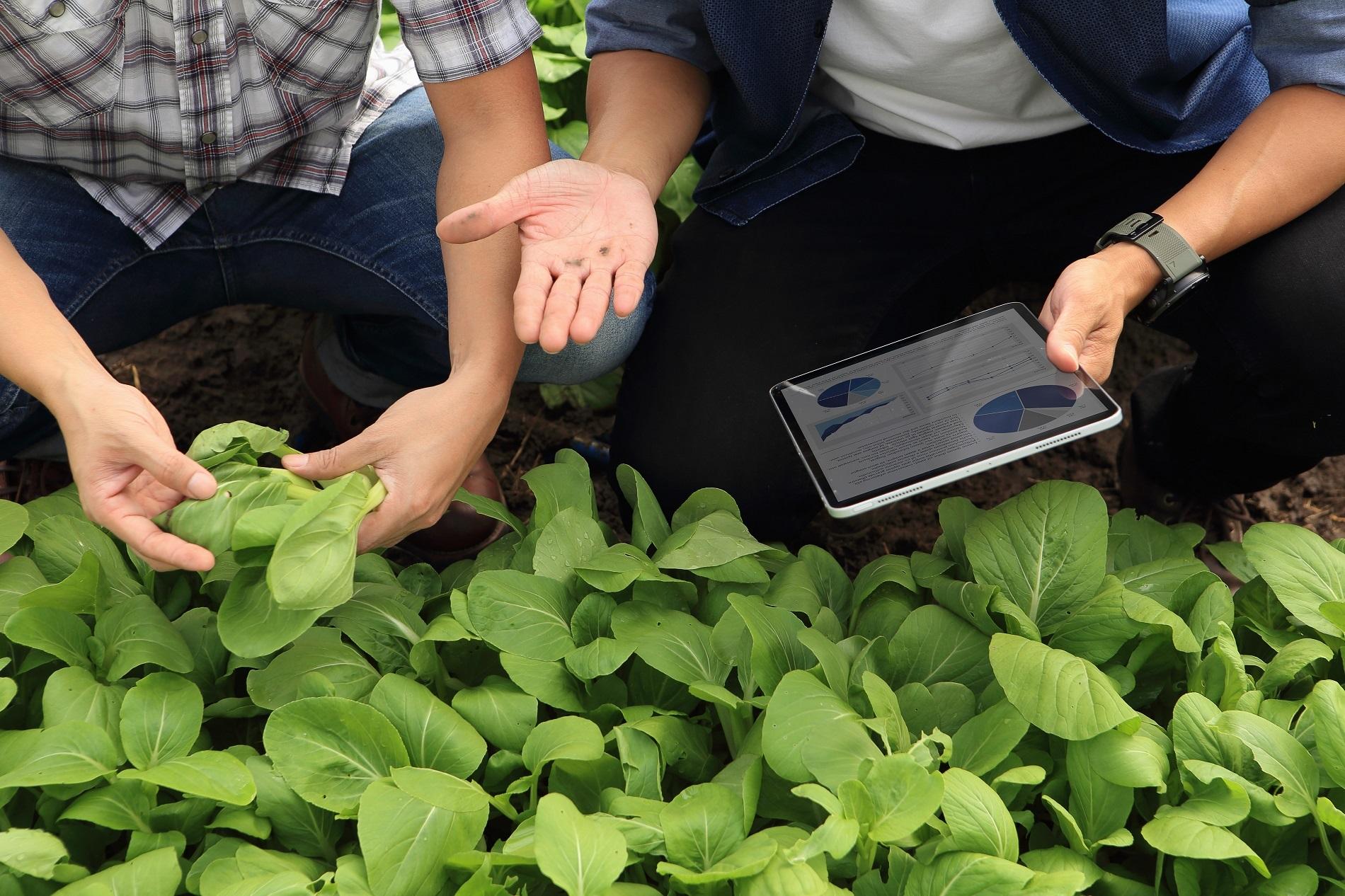 Buenas prácticas en el uso de fitosanitarios: antes de la aplicación