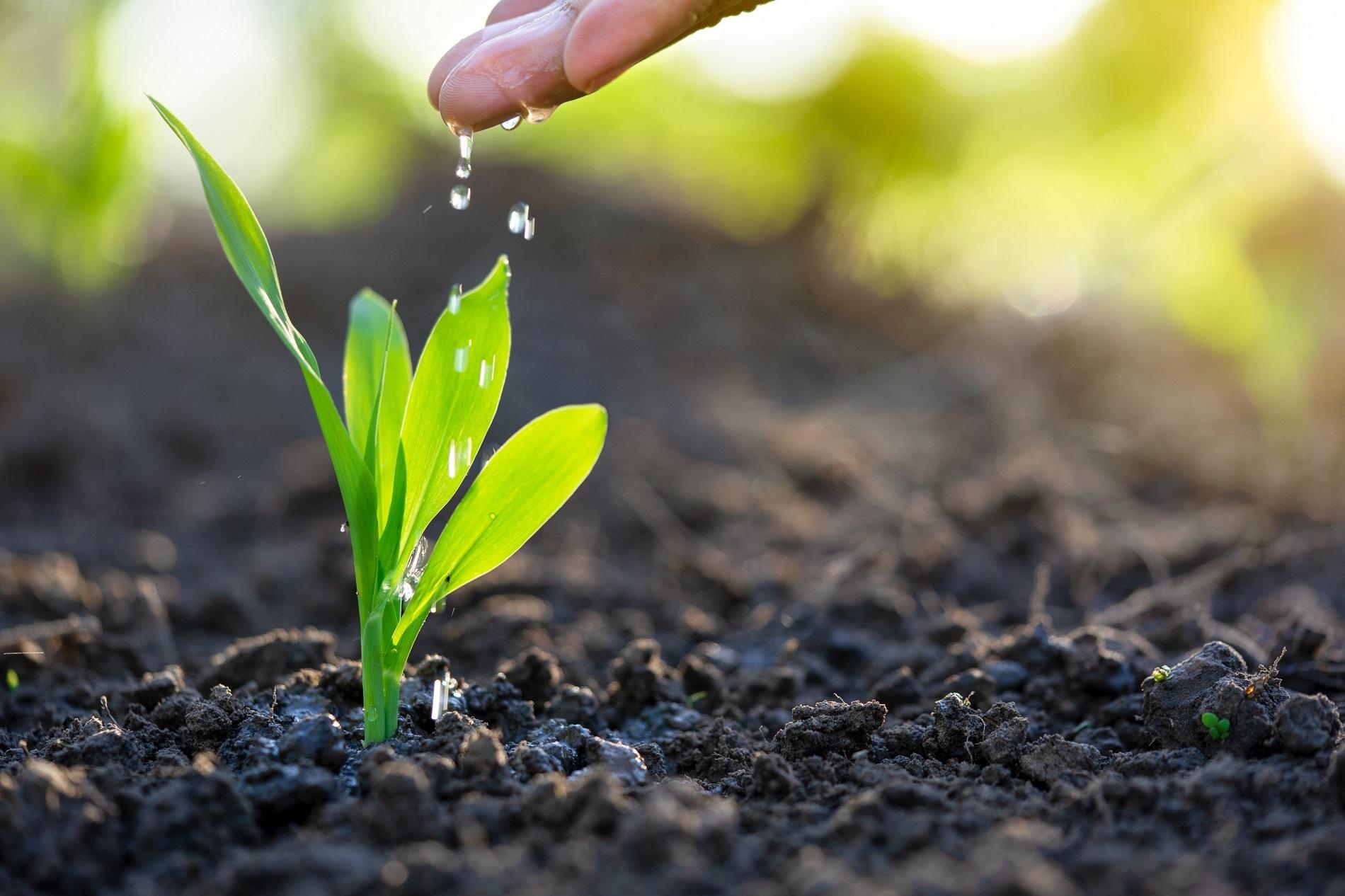 Buenas prácticas agrícolas: Aprovechamiento del agua de riego