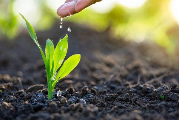 buenas prácticas agrícolas agua de riego consumo eficiente agricultura sostenibilidad sanidad vegetal aepla