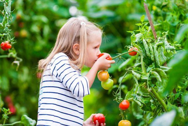 huertos urbanos niños convivencia familiar valores educación ambiental desarrollo infantil agricultura concienciación verde aepla