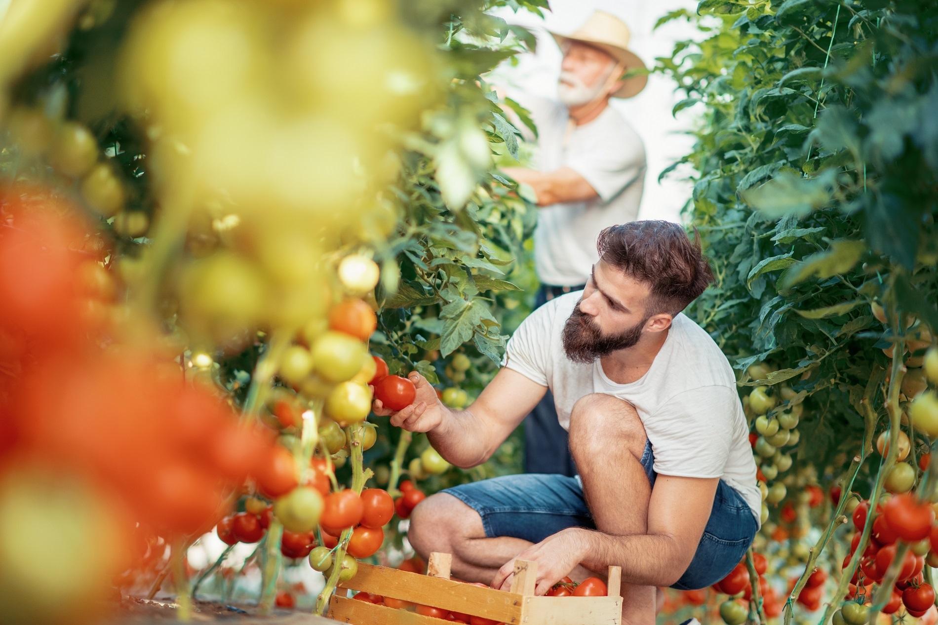 La agricultura familiar como pilar básico para garantizar nuestro bienestar