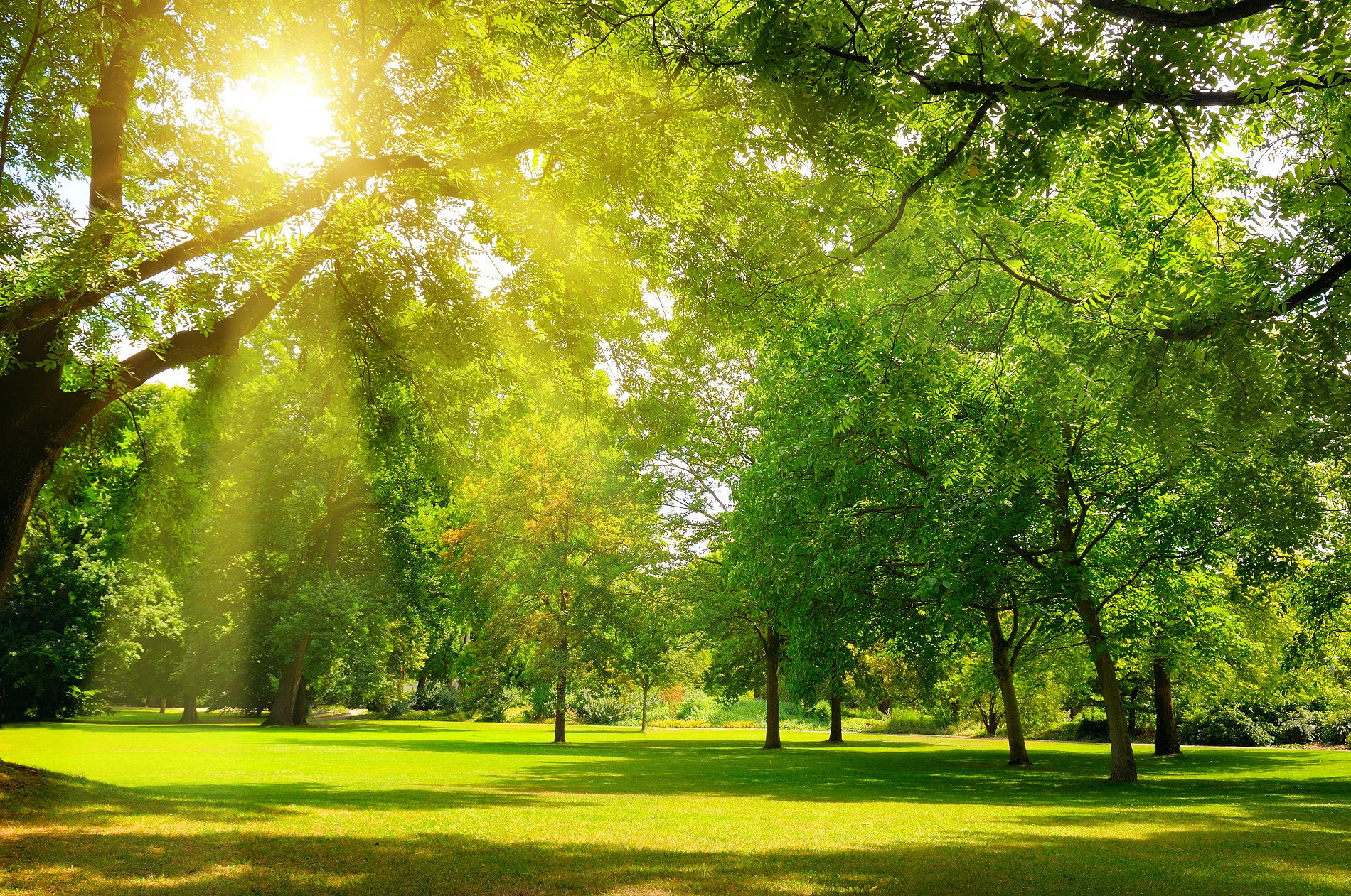 Recomendaciones para el mantenimiento óptimo de áreas verdes urbanas durante el verano