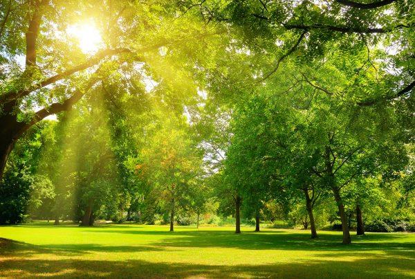 áreas verdes urbanas verano mantenimiento parques públicos jardines públicos sanidad vegetal ciudades verdes aepla