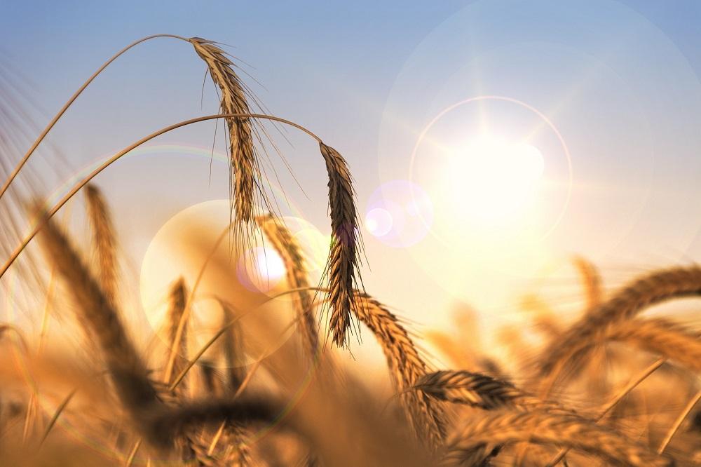 ¿Cómo está afectando el cambio climático a la producción de alimentos?