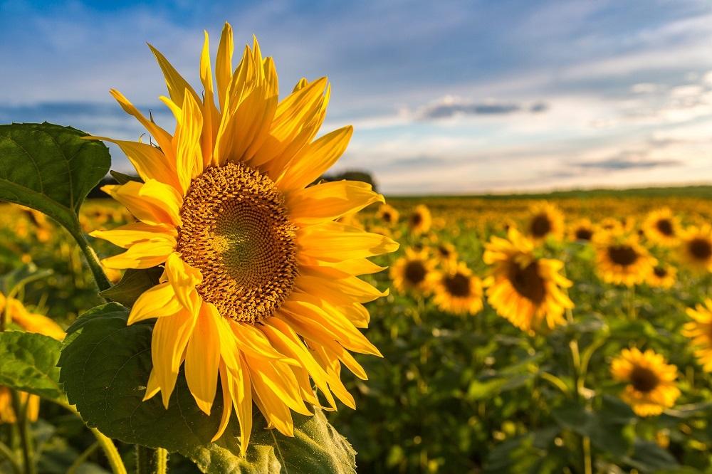 ¿Cómo actuar ante el riesgo de aumento de plagas en tus cultivos en verano?