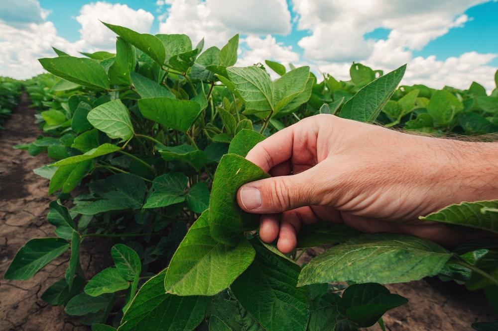 ¿Qué debes hacer para reducir el riesgo de resistencias en tus cultivos?
