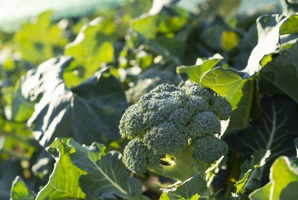 productos de proximidad kilómetro cero sector agrícola agricultura sostenible sostenibilidad comercio local sanidad vegetal protección de cultivos agricultura aepla