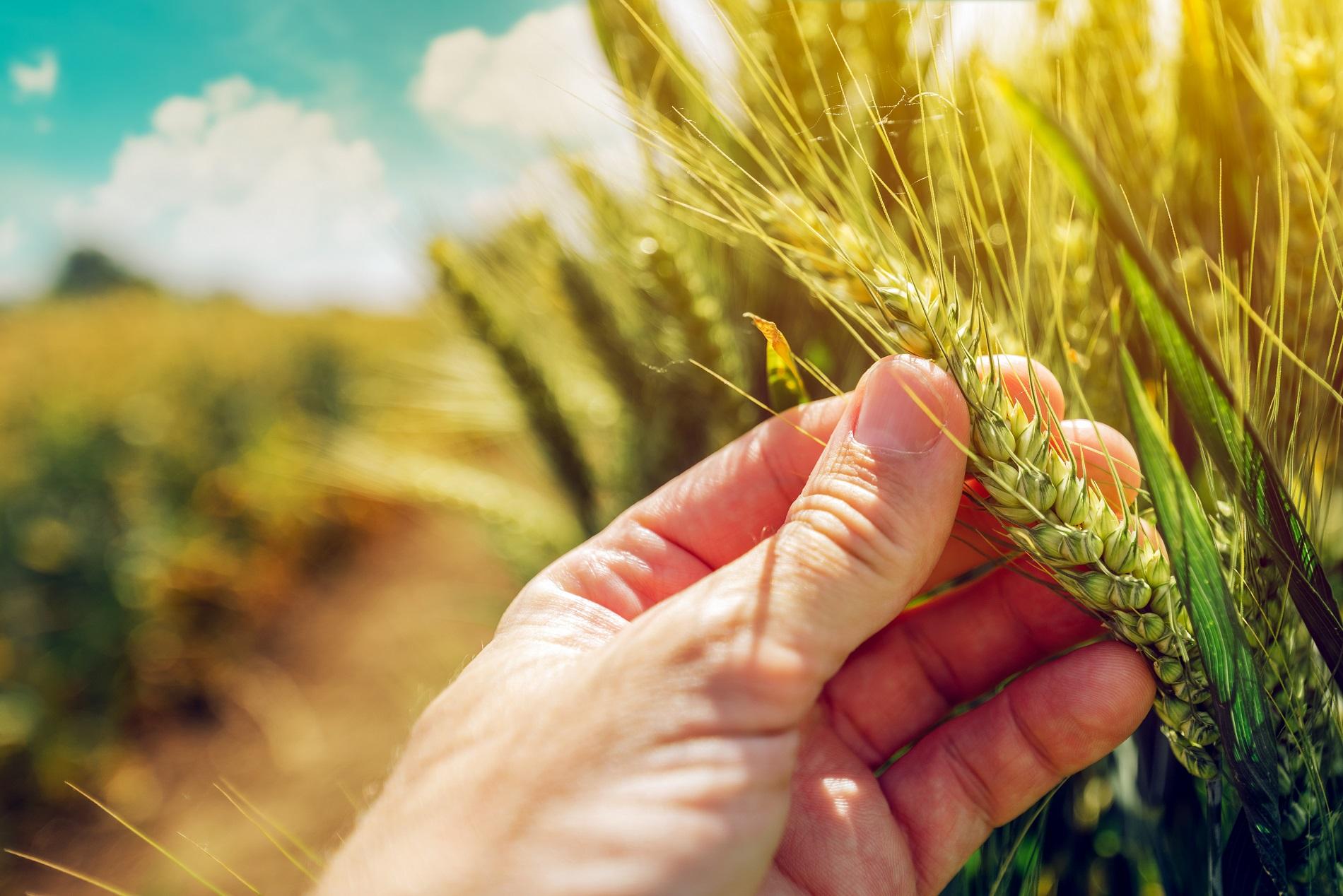 Buenas prácticas agrícolas: Condiciones ideales para la aplicación de fitosanitarios