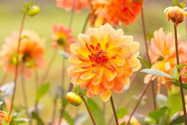 otoño jardín doméstico cuidado y mantenimiento jardinería sanidad vegetal áreas verdes aepla