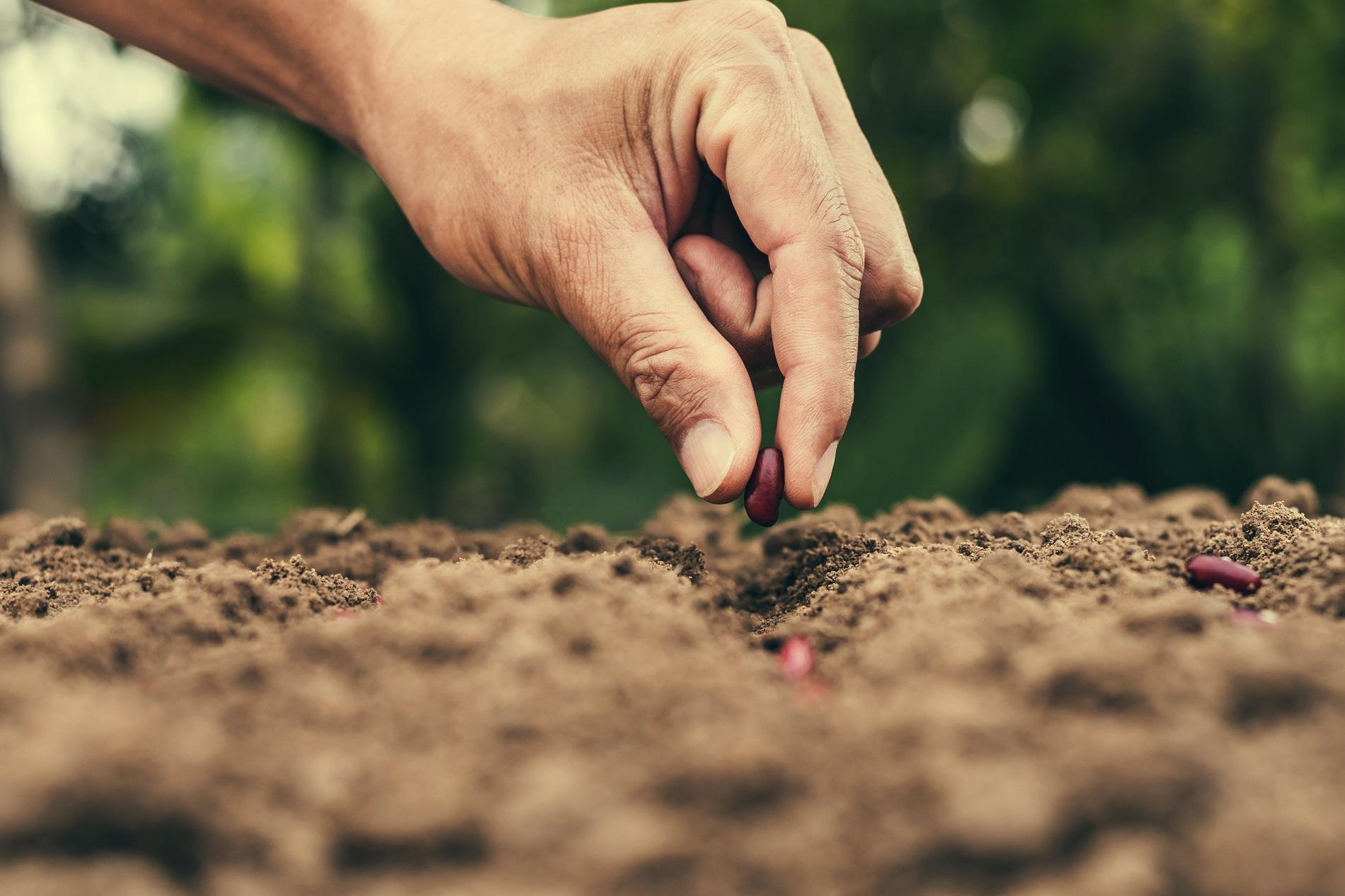 ¿Qué tipos de siembra puedes realizar en tu huerto doméstico?