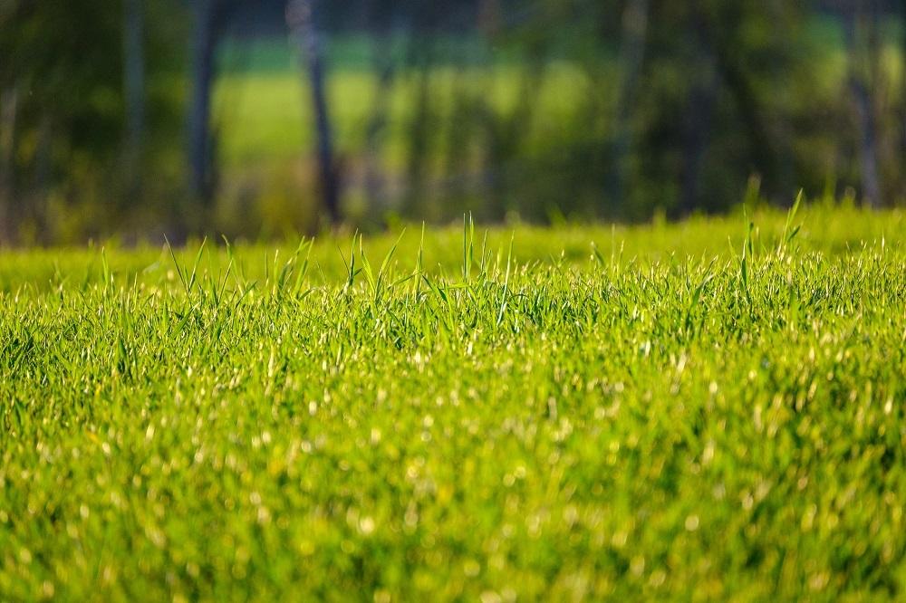 cubiertas vegetales protección de cultivos sanidad vegetal agricultura sostenible sostenibilidad buenas prácticas aepla