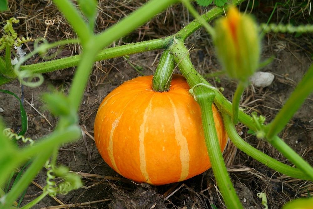 Consejos útiles para garantizar el cuidado de tu huerto urbano durante el otoño