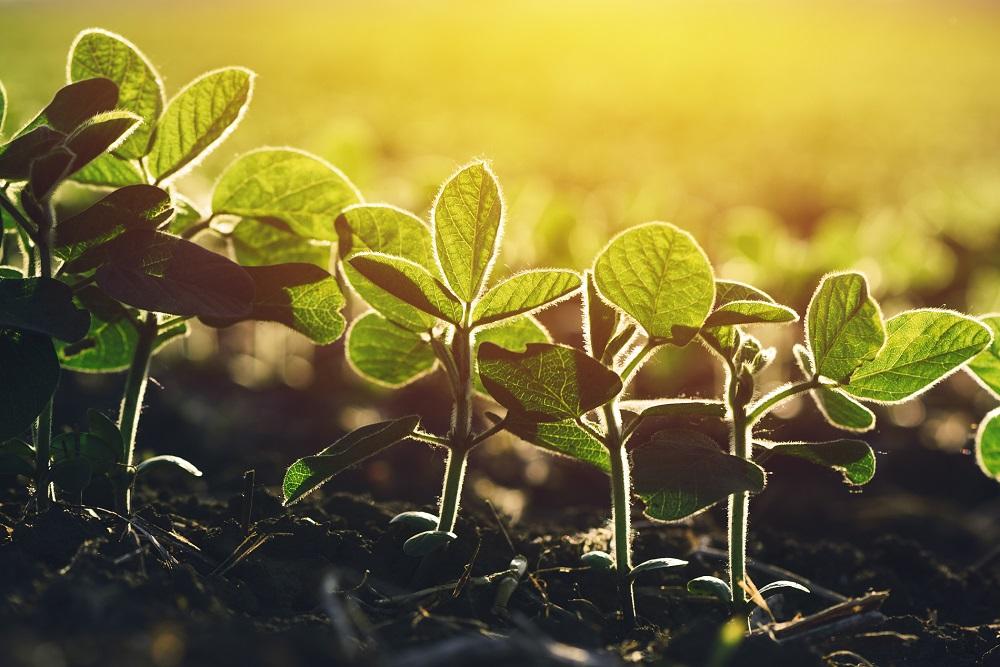 Sanidad vegetal: acompañando a la agricultura para conseguir un mundo mejor
